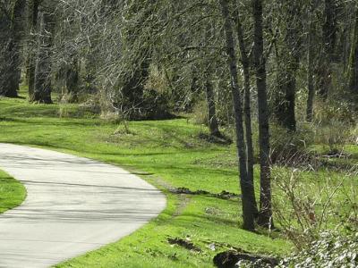 een kronkel pad door het bos waarin jij je eigen pad mag volgen