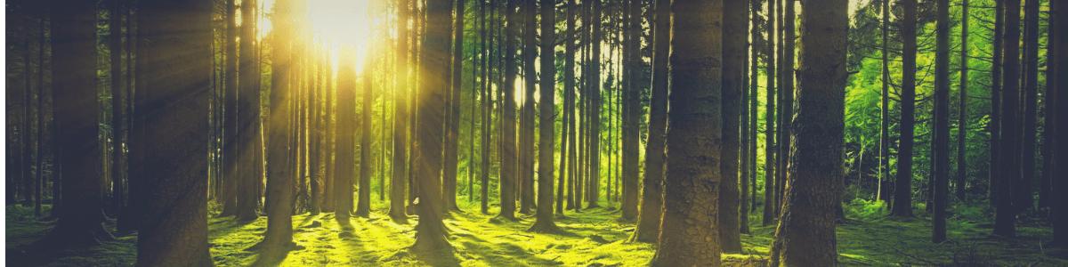 je kijkt naar een bos waar de zon met als zijn warme stralen door de bomen schijnt, je uitnodigt om vooral in het bos te komen wandelen en te aarden