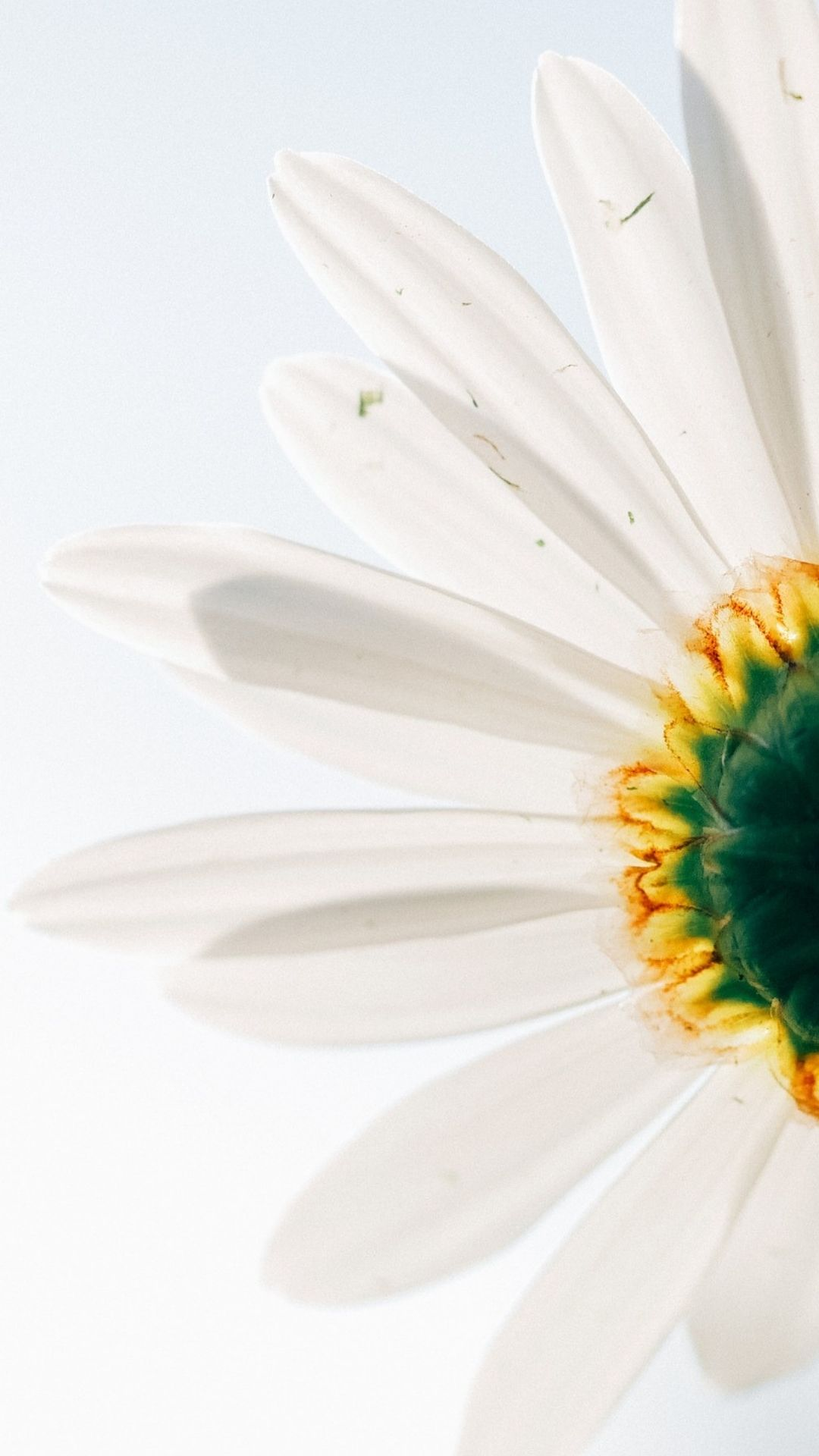 Zuiver Bewust een deel van een madelief bloemetje